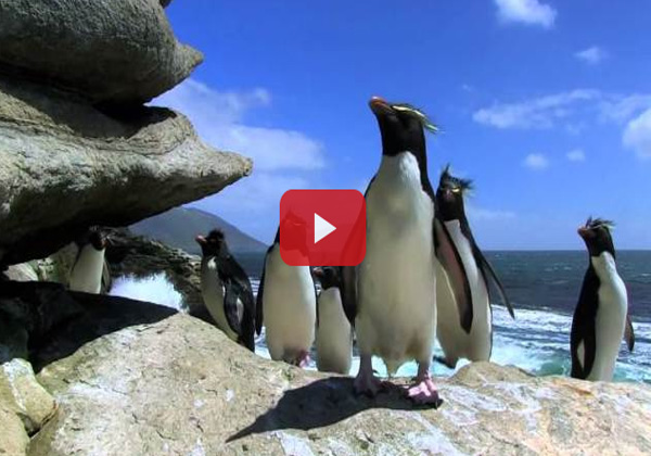 A Hilarious Compilation of Penguins Greatest Bloopers