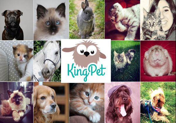 King Pet Photo Contest